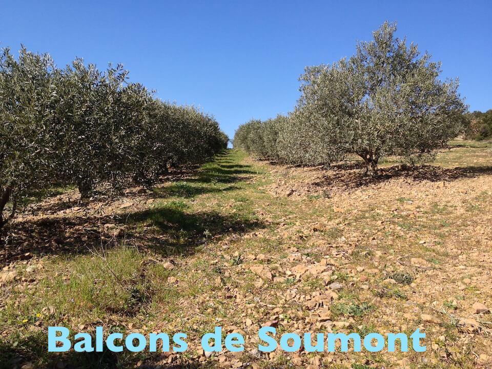 Randonnées pédestres Soubès - Camping Hérault